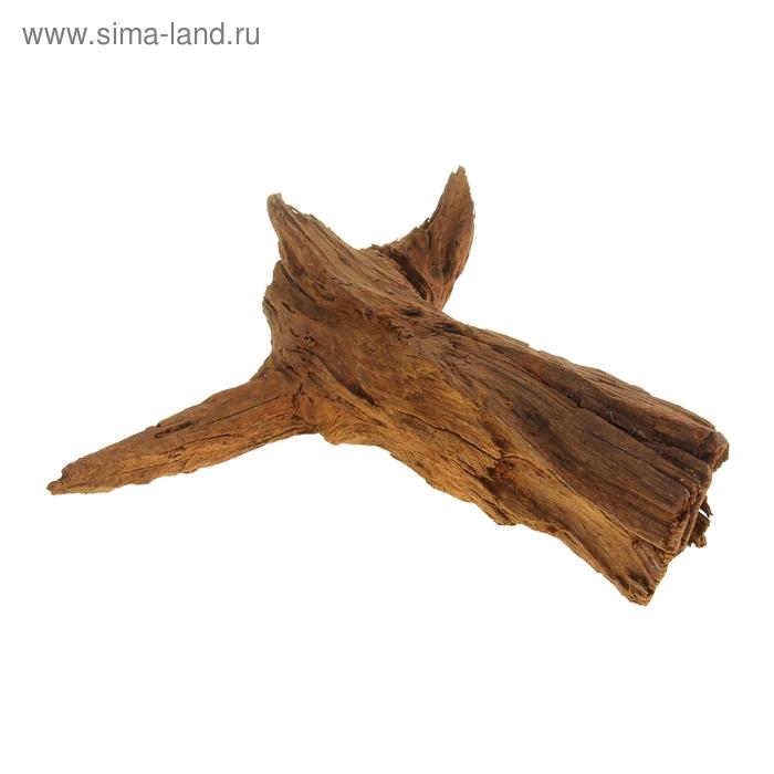 Корень мангрового дерева, натуральный (водная часть) 35-55 см mangr-m
