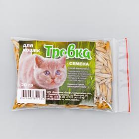 "Семена ""Травка для проращивания"", пакет"
