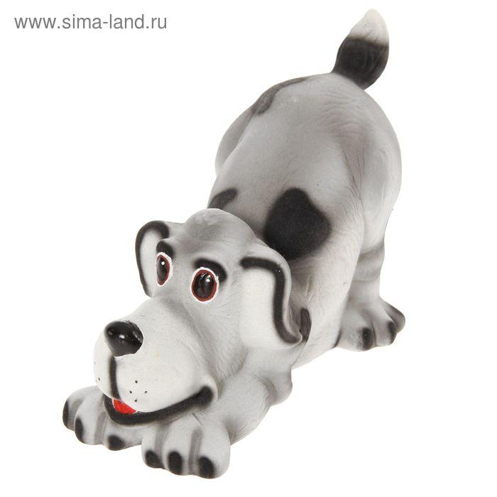 """Копилка """"Собака с бантом"""" флок, белая"""