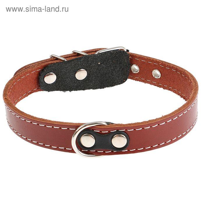 Ошейник кожаный однослойный, 47 х 2 см, с выносным кольцом микс цветов
