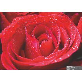 Фотообои К-004 «Фламенко» (4 листа), 210 × 140 см Ош