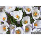 Фотообои К-057 «Утренняя весна» (16 листов), 280 × 200 см