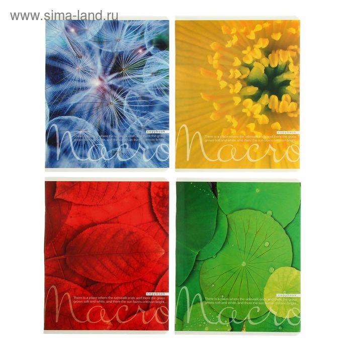 """Тетрадь 48 листов клетка """"Цвета природы"""", картонная обложка, 4 вида МИКС"""