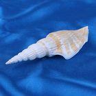 Морская раковина декоративная Стромбус витатус шт. 10176