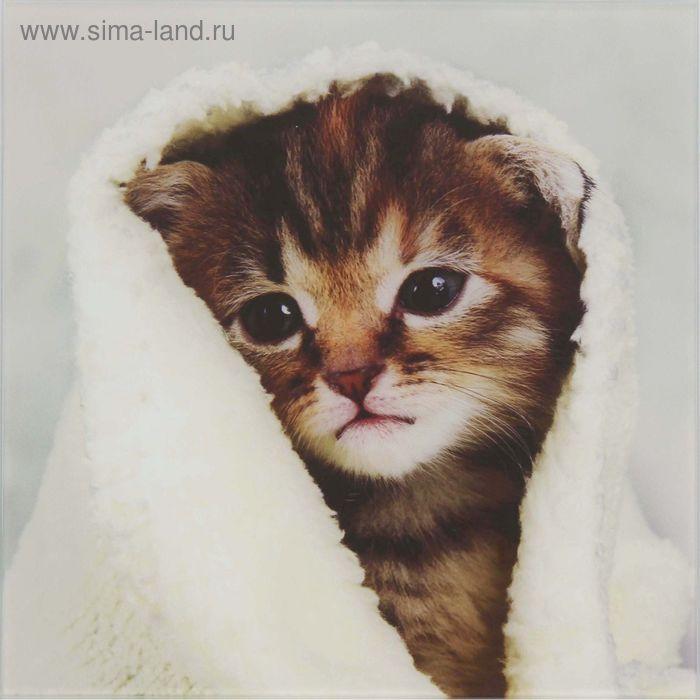 """Картина на стекле """"Котик в полотенце"""""""