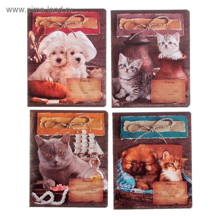 """Тетрадь 24 листа линейка """"Кот и пес"""", картонная обложка, вд-лак, МИКС"""