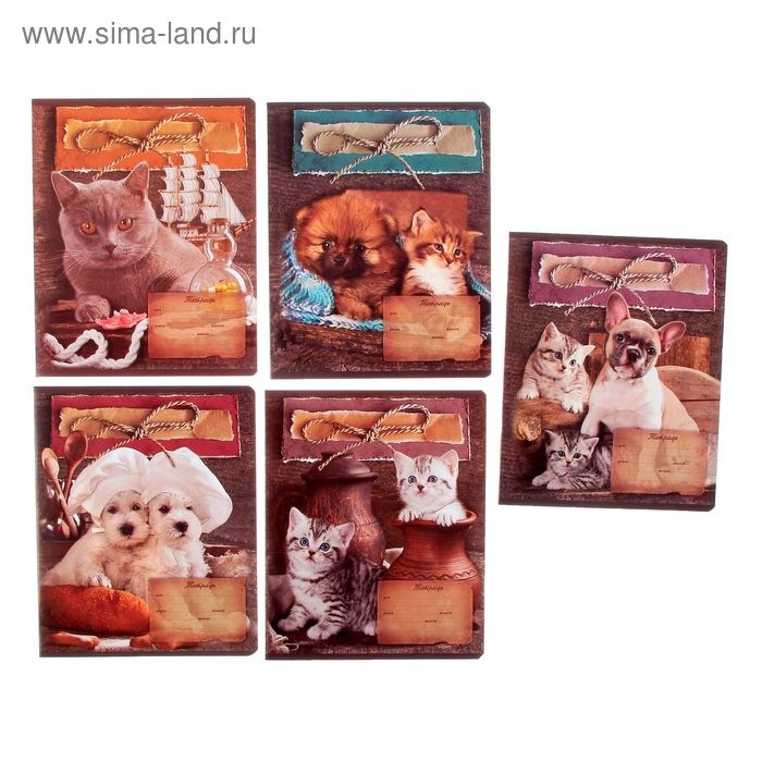 """Тетрадь 24 листа клетка """"Кот и пес"""", картонная обложка, вд-лак, МИКС"""