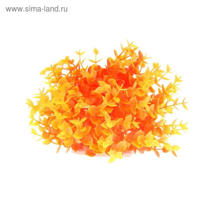 Растение искусственное аквариумное Жерушник водный оранжевый, 20 х 20 х 16 см