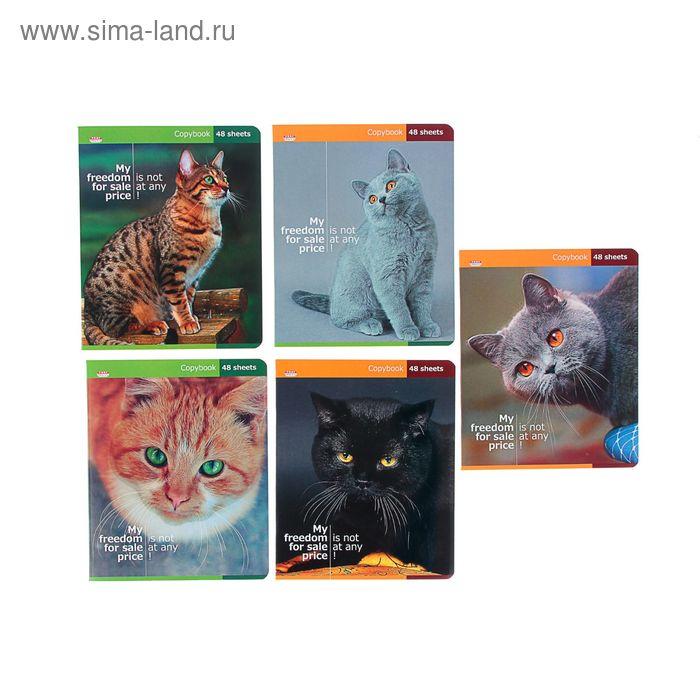 """Тетрадь 48 листов клетка """"Красивые кошки"""", картонная обложка, выборочный лак, МИКС"""