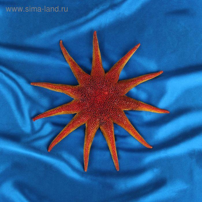 Морская звезда декоративная SS25 9454