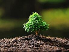 Программа озеленения сада: выбираем и высаживаем деревья