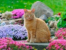 Красивые грядки для вашего сада